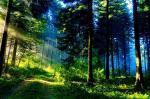 Pohlednice - les